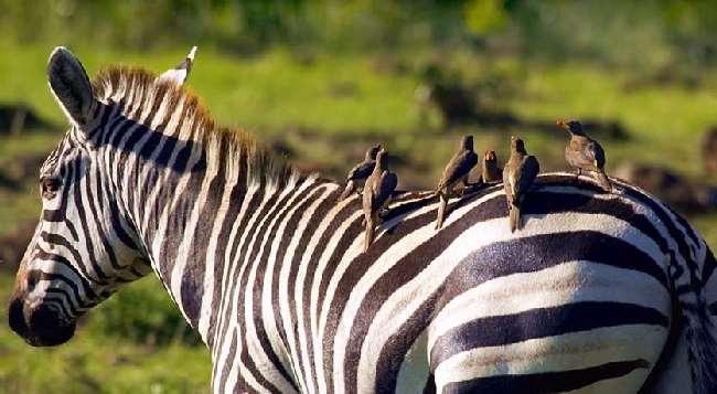Shangrala's Aww Animals 5