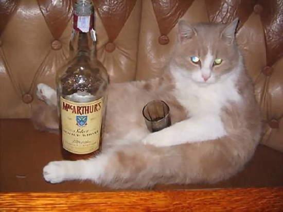 Shangrala's Drink Responsibly