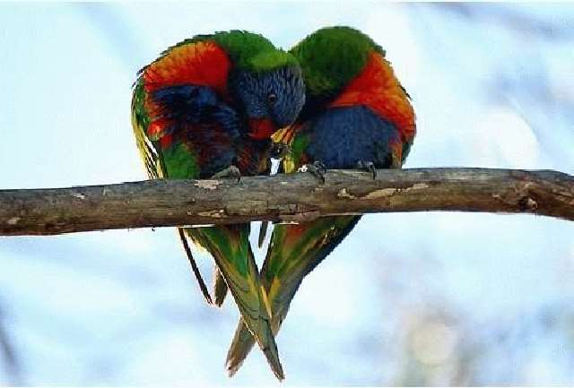 Shangrala's What Is Love I