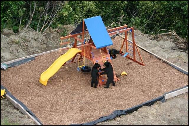 Shangrala's Bear Playground
