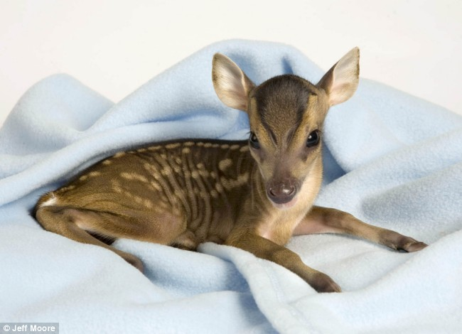 Shangrala's The Miracle Fawn