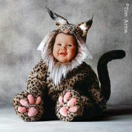 Shangrala's Sweet Baby Overload