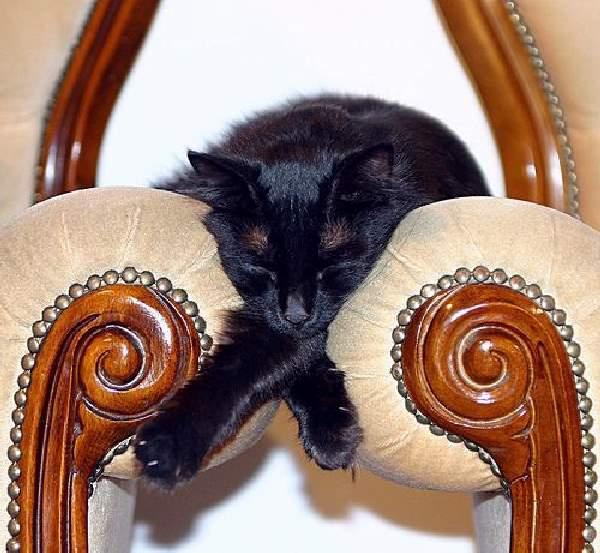 Taking A Catnap 2