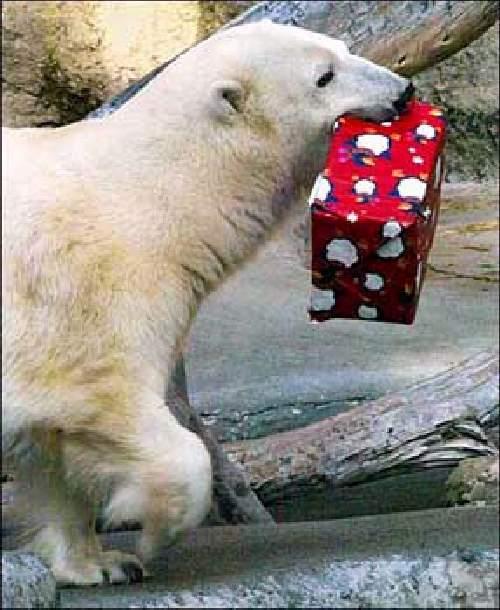Shangrala's Christmas With Pets