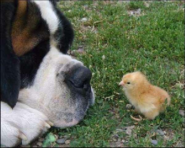 Shangrala's Dog Logic