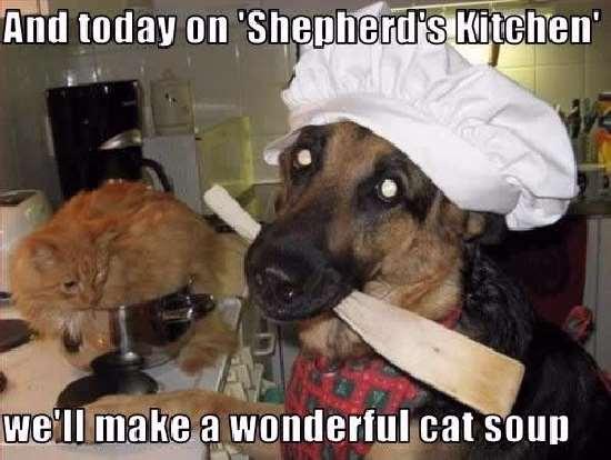 Shangrala's It's A Dog's World