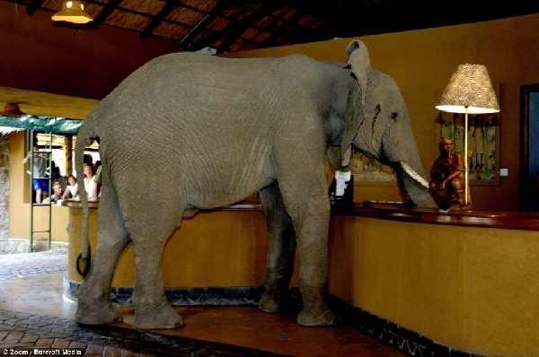 Shangrala's Elephant Hotel