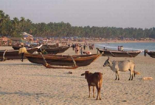 Shangrala's Beaches In India