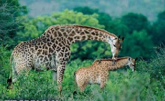Shangrala's Best Parents