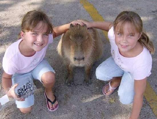 Shangrala's World's Largest Rodent