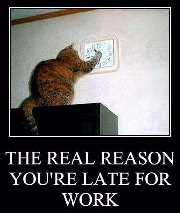 Shangrala's Cat Motivational Posters