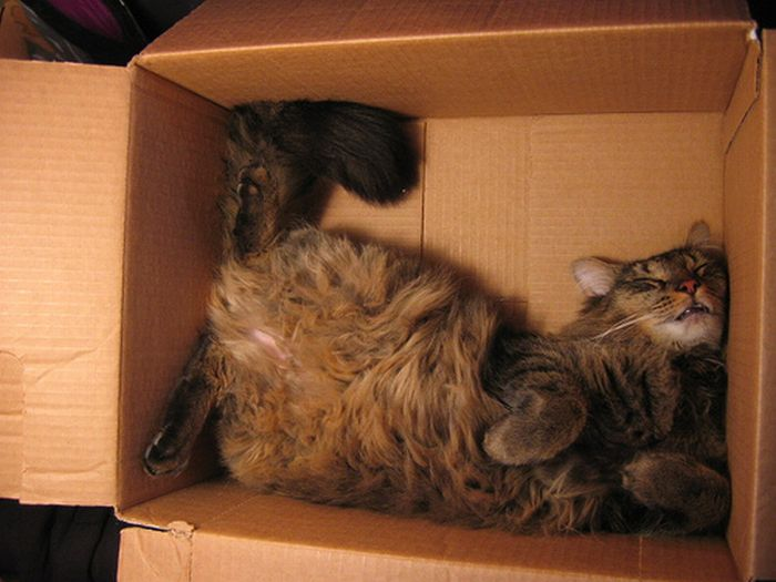 Shangrala's Cat In A Box