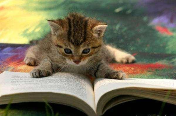 Shangrala's My Catty Life!
