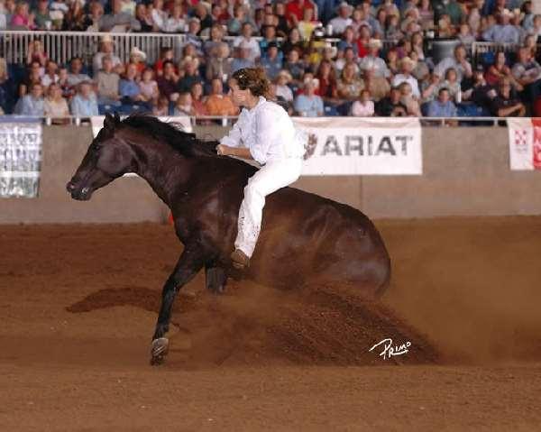 Shangrala's Amazing Horse Trainer
