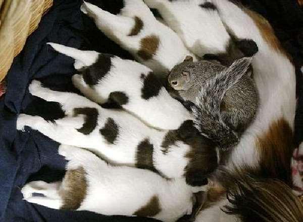 Shangrala's Baby Squirrel Finnegan