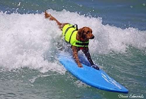 Shangrala's Ricochet The Surf Dog