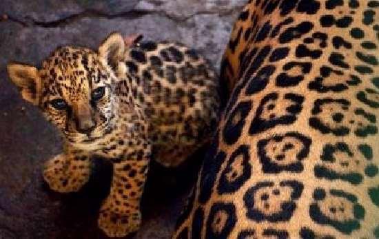 Shangrala's Aww Animals 6