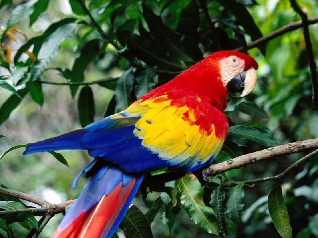 Shangrala's Colorful Birds