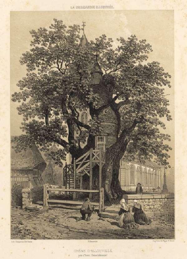 Shangrala's Chapel Oak