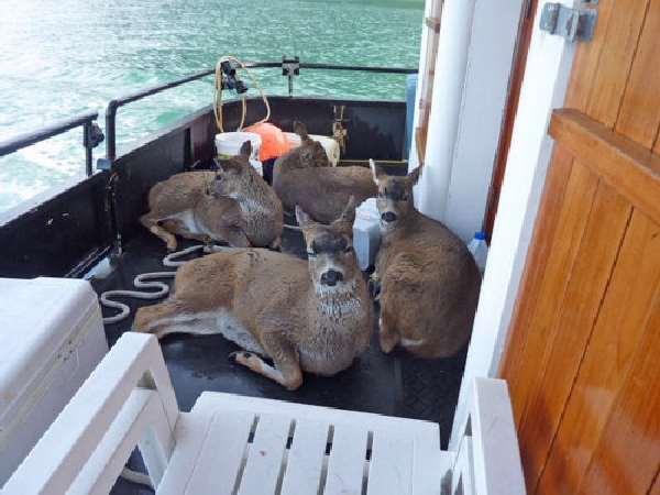Shangrala's Deer Rescue