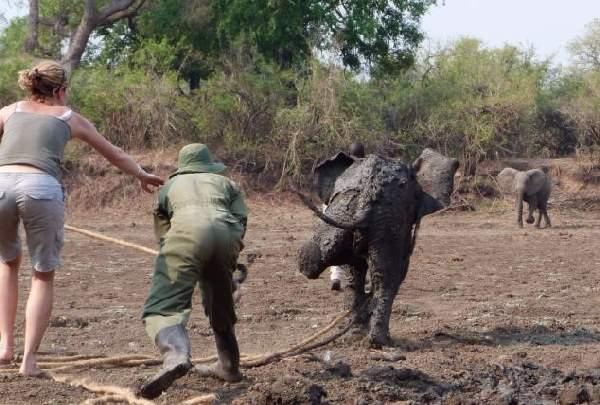 Shangrala's Elephant Rescue