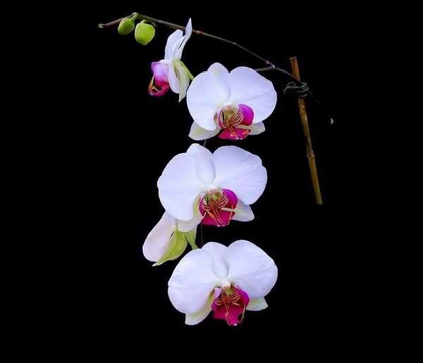 Shangrala's Beautiful Flowers