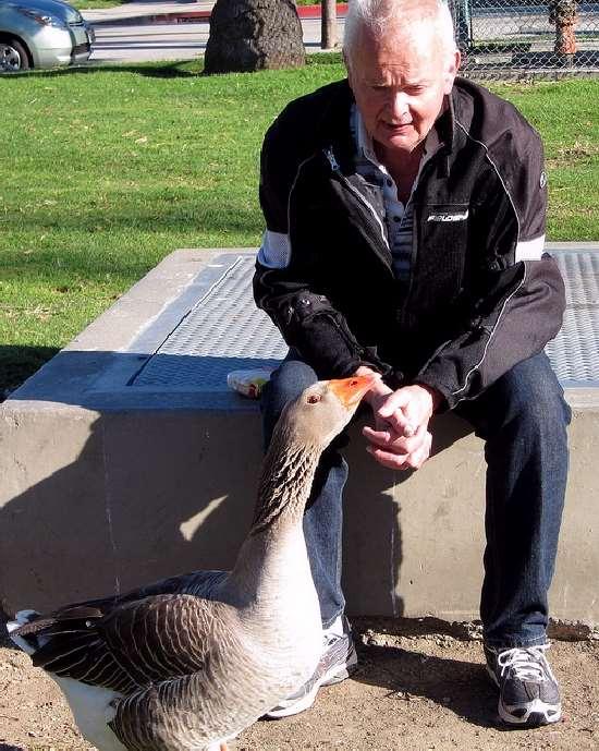 Shangrala's Maria The Goose