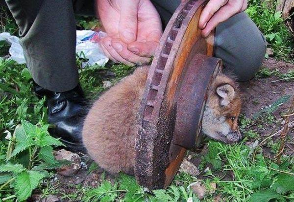 Shangrala's Stuck Animals