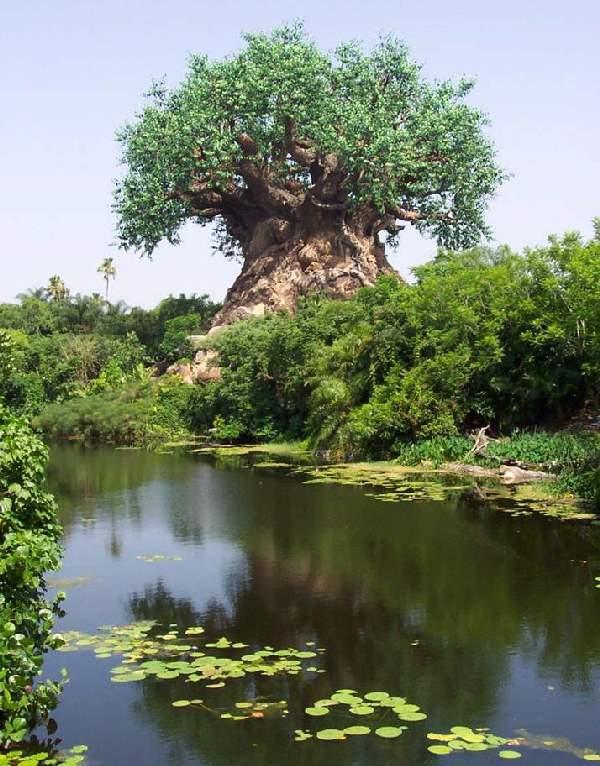 Shangrala's Disney Tree Of Life