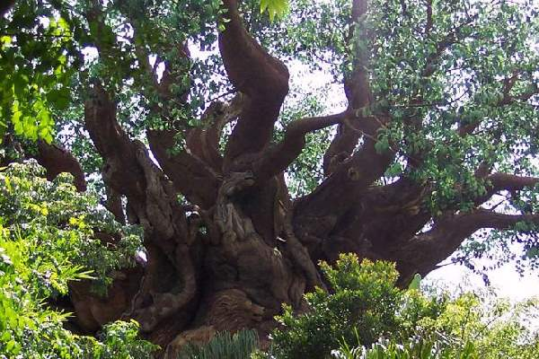Shangrala's Disney Tree Of Life