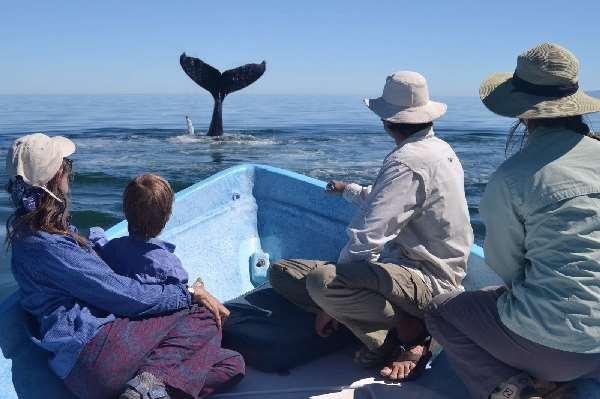 Shangrala's Whale Rescue 2