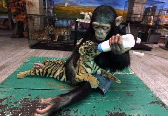 Shangrala's Aww Animals 7