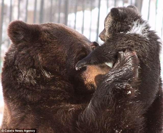 Shangrala's The Real Three Bears