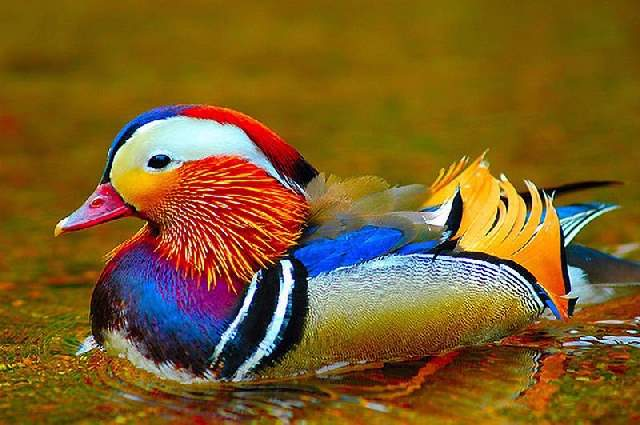Shangrala's Colorful Birds 2