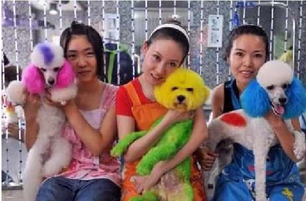 Shangrala's China's Craze For Dogs