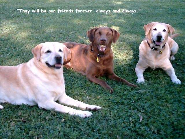 Shangrala's Why We Love Dogs