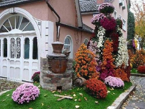 Shangrala's Germany's Chrysanthemum Festival