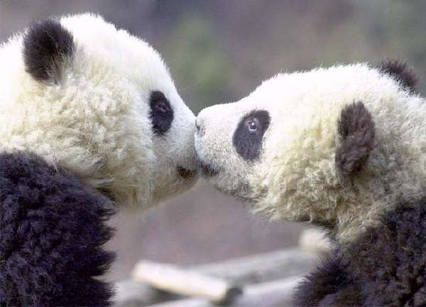 Shangrala's Kisses Sweeter Than Honey