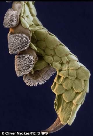 Microscopic Winners