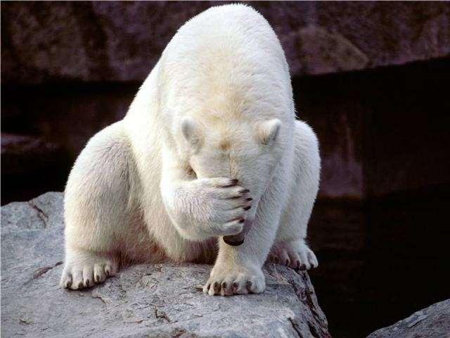 Shangrala's Polar Bear Cubs
