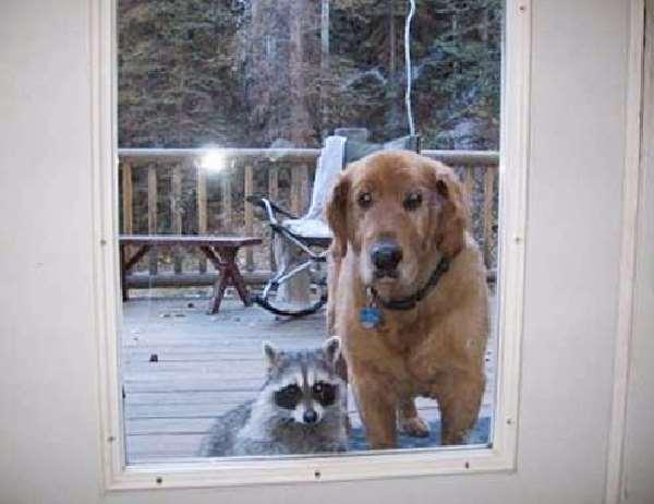 Shangrala's Pets Being Pets