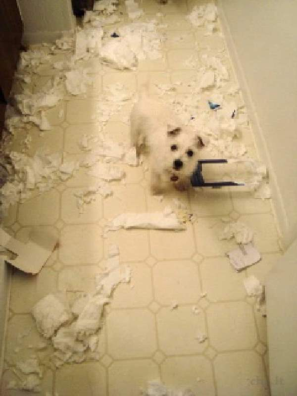 Shangrala's Pets Left Home Alone