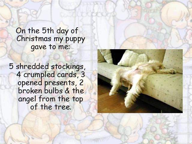 Shangrala's Puppy Days Of Christmas