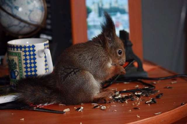 Shangrala's Rescued Squirrel