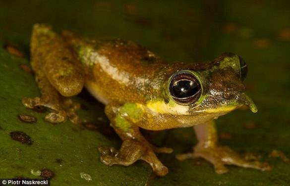 Shangrala's Scientists Unveil New Species