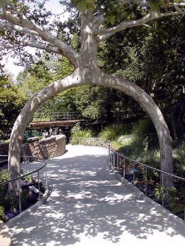 Shangrala's Fantasy Trees