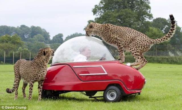 Shangrala's Longleat's Meals On Wheels