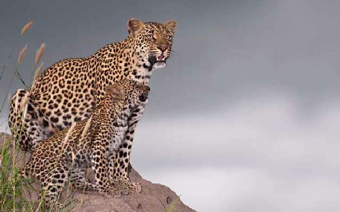 Shangrala's In The Wild With Brendon Cremer