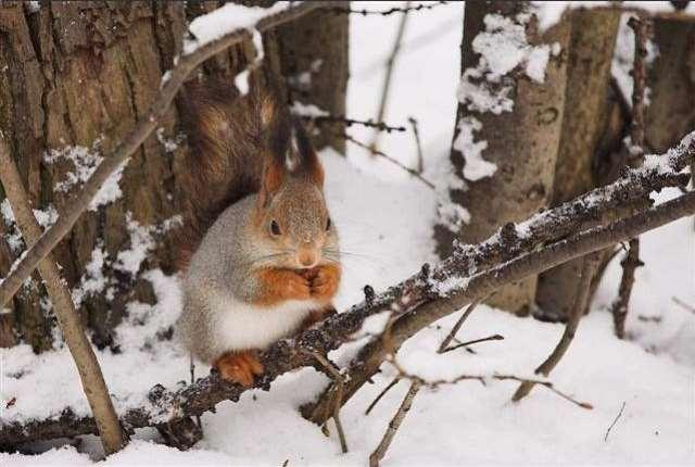 Shangrala's Winter Wildlife 2