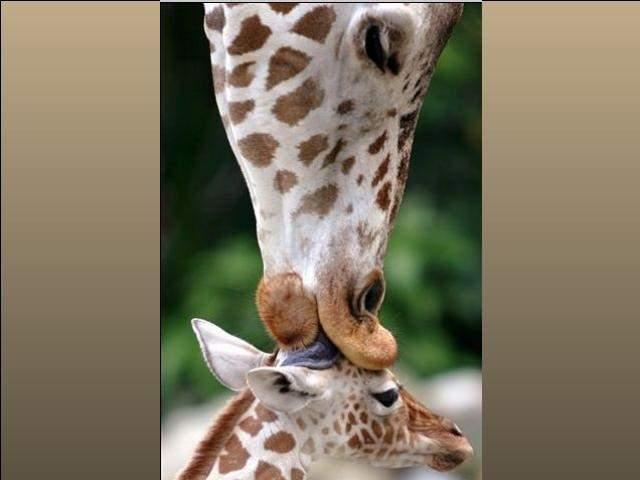 Shangrala's Animal Moms 3
